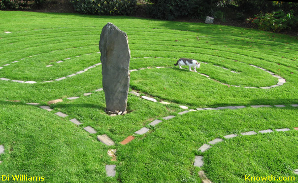 Cat walking the Labyrinth