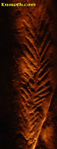 New Grange - Representation of a fern or maybe a sheef of wheet